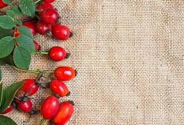 Hagebuttenöl aus Hagebutten Früchten